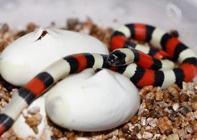 ReptilesVilu_MG_7688