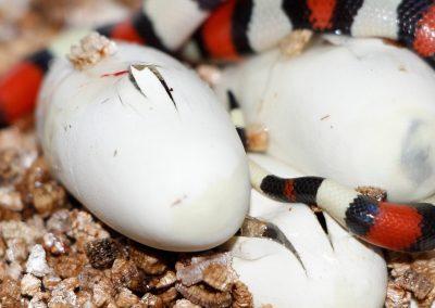 ReptilesVilu_MG_7693