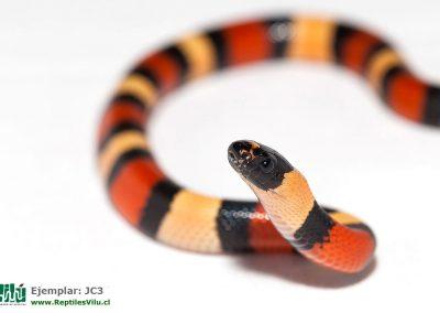 ReptilesVilu_IMG_2595