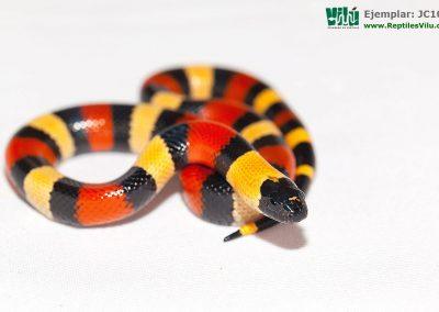 ReptilesVilu_IMG_2641