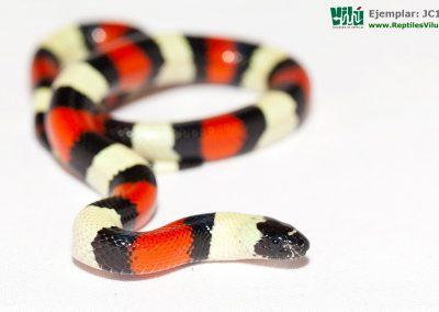 ReptilesVilu_IMG_2687