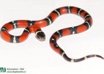 ReptilesVilu_IMG_2741
