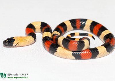 ReptilesVilu_IMG_2886