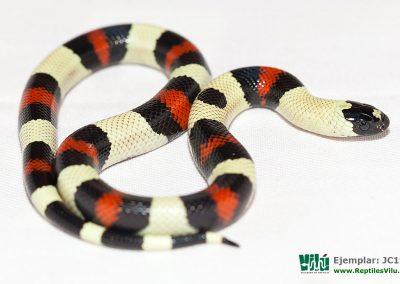 ReptilesVilu_IMG_2909