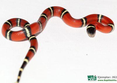ReptilesVilu_IMG_2939