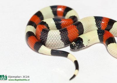 ReptilesVilu_IMG_2979